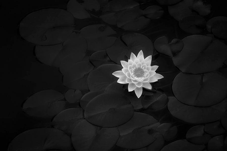 Silver-Lotus----JK---SZP