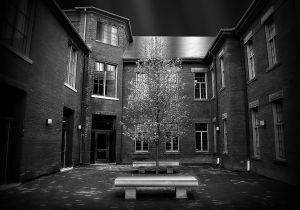 Tree of knowledge BW SZP.jpg