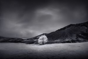 Ice-Tree-SZP-JK.jpg