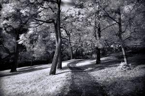 Kosmopoulos_John_High_Park.jpg